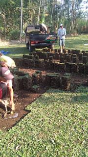 Harga jual rumput mutiara rumput gajah mini di malang tahun 2021