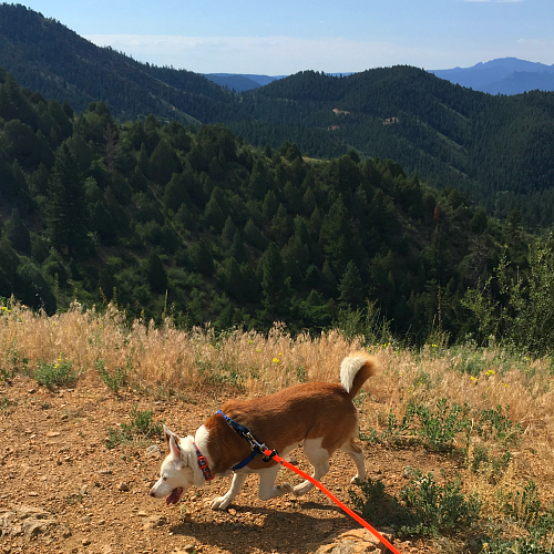 red and white dog in the mountains