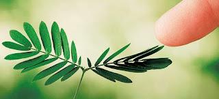 Resultado de imagen de plantas tienen conciencia