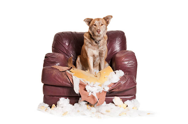 Separation Anxiety in Dogs – Training for It
