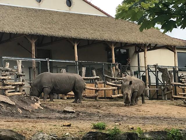 Zoo de beauval rhinoceros