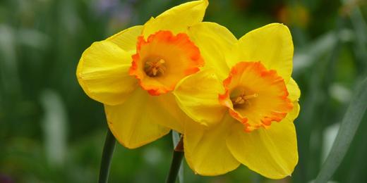 Twitter Headers 2014: Twitter Header - Yellow Flowers