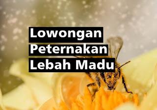Lowongan Peternakan Lebah Madu (tamatan pertanian sebagai staff produksi)