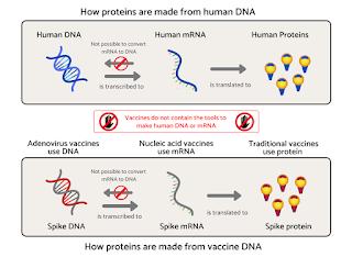Protin dihasilkan daripada proses transkripsi dan translasi kod genetik