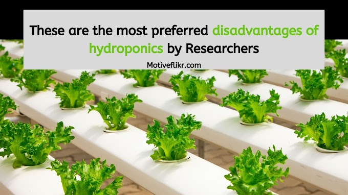Researchers suggests disadvantages of hydroponics for beginners
