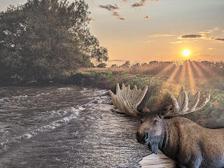 Moose By The Shore