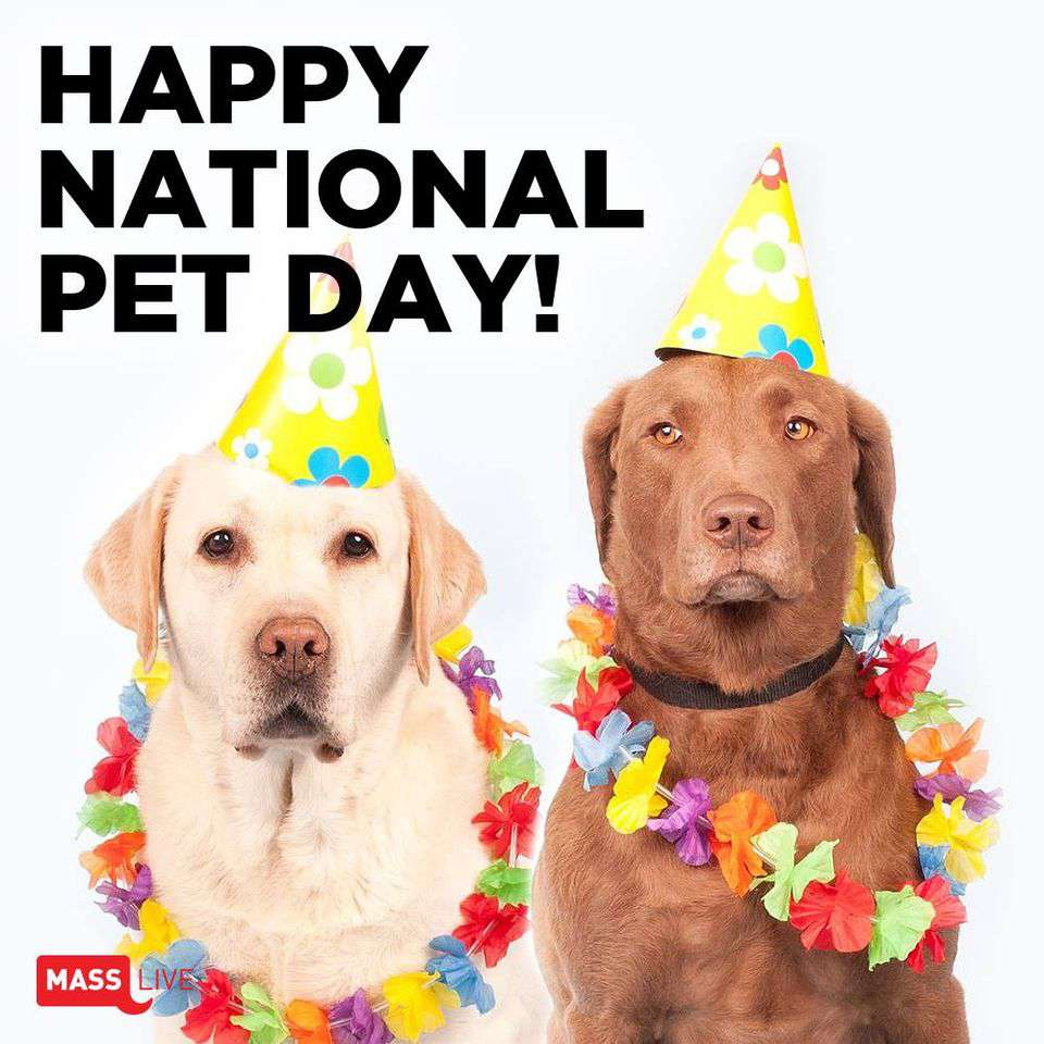 National Pet Day Wishes Photos