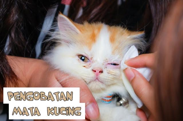 Salep Sakit Mata untuk Kucing