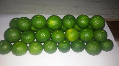 Jeruk Limau atau Jeruk Limo
