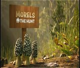 morels-the-hunt