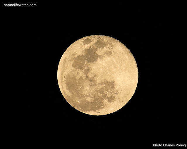 picture of super full moon in Manokwari city of West Papua