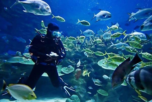 cum-este-sa-faci-diving