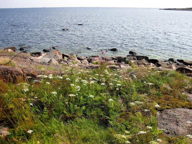 Kukkivia kasveja, kalliota ja kivikkoa lähellä rantaa
