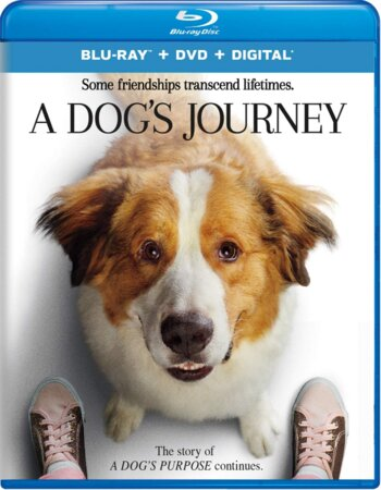A Dogs Journey (2019) English 480p BluRay x264 300MB ESubs Movie Download