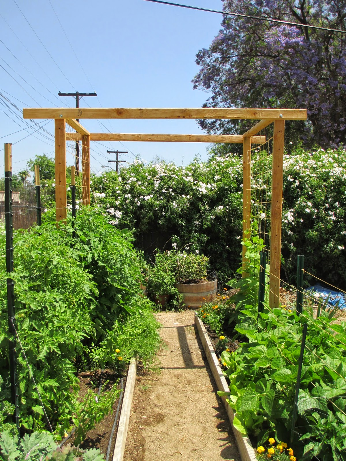 Andie S Way Tomato And Bean Trellis Andie S Way It