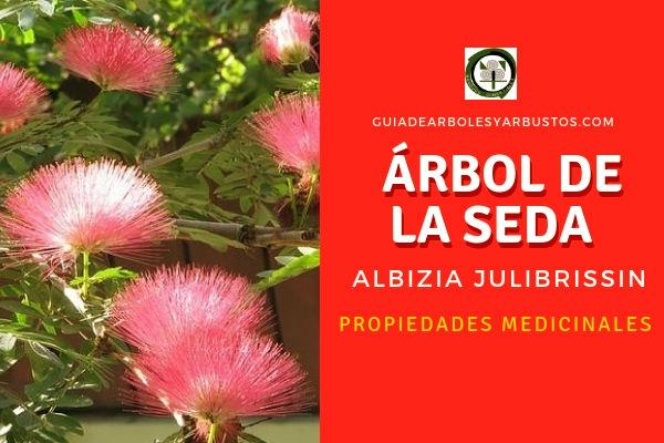 Árbol de la Seda, Albizia julibrissin, propiedades medicinales las encontramos en las flores y corteza de este árbol.