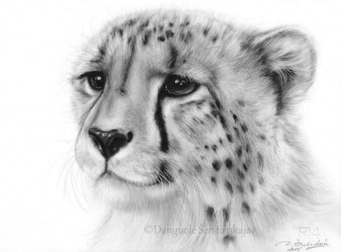 02-Cheetah-Danguole-Serstinskaja-Animal-Dry-Brush-Technique-Paintings-www-designstack-co