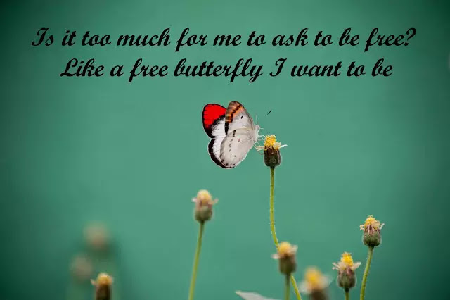 butterfly in my stomach love quotes