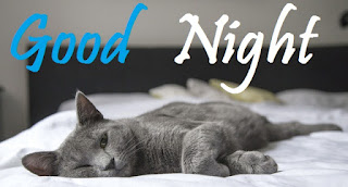 good night images of cute cat baby