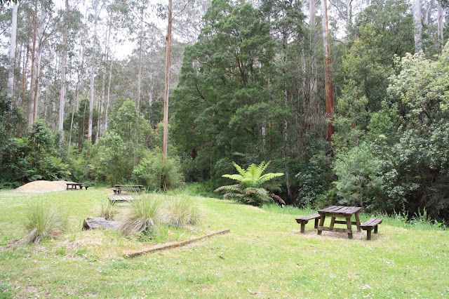 picnic in forest clearing