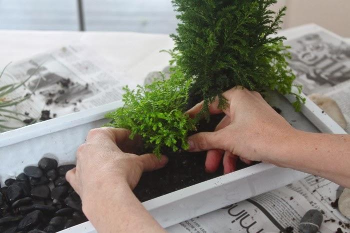 Añadiendo el resto de plantas