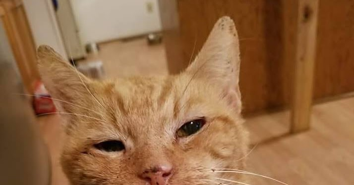 I lost my cat and I can't stop crying and thinking about him what should I do?