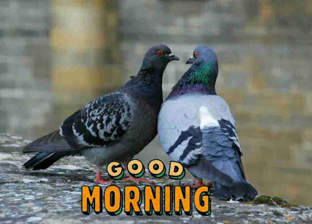Beautiful good morning pictures with cute birds