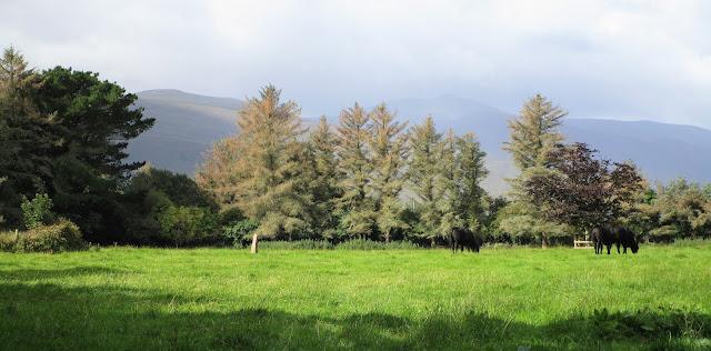 Irlantilainen maalaismaisema