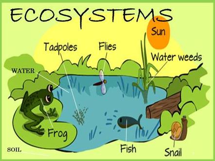 Apa Itu Ekosistem dan Komponen Penyusun Ekosistem Pengertian Ekosistem Ekosistem adalah sebuah tempat berlangsungnya hubungan saling ketergantungan antarmakhluk hidup beserta lingkungan tempat tinggalnya.  Dalam sebuah ekosistem, tidak hanya makhluk hidup (biotik) yang berperan tapi juga benda mati (abiotik).  Sebagai contoh ekosistem di laut. Di dalam laut terdapat terumbu karang, koral, hewan-hewan yang menghuni laut.  Jenis Jenis Ekosistem Ekosistem terbagi dalam 2 jenis yang di antaranya adalah :  Ekosistem Alam Ekosistem alam adalah ekosistem yang terbentuk secara alami, tidak dibuat-buat, atau tanpa campur tangan manusia dalam proses pembentukannya. Contoh dari ekosistem alam adalah : Gunung Hutan Laut Danau Sungai  Ekosistem Buatan Ekosistem buatan adalah ekosistem yang proses pembentukannya sengaja dibuat oleh manusia.  Contoh dari ekosistem buatan adalah : Kebun Binatang Kebun Sawah Akuarium Kolam Waduk  Komponen Penyusun Ekosistem Komponen-komponen penyusun dari ekosistem adalah dengan sebagai berikut : Produsen Organisme yang berperan sebagai produsen adalah tumbuhan, terutama tumbuhan berklorofil (organisme autotrof) yang mampu membuat makanan sendiri (fotosintesis). Faktor abiotik berpengaruh dalam proses fotosintesis adalah cahaya matahari.  Kelompok produsen merupakan kelompok yang sangat penting karena selain memproduksi makanan, kelompok ini juga menyediakan tempat bernaung dan produksi oksigen.  Konsumen Organisme yang berperan sebagai konsumen adalah hewan termasuk manusia. Konsumen adalah organisme heterotrof dan pelaku konsumsi organisme produsen. Mereka tidak dapat membuat makanan sendiri sehingga keberadaannya sangat tergantung oleh keberadaan produsen pula.  Pengurai Organisme dekomposer disebut juga sebagai organisme pengurai, seperti bakteri dan jamur. Di alam mereka merombak material organik dari organisme yang mati dan mengurai sedemikian rupa menjadi bahan-bahan sederhana yang diperlukan produsen.  Detritivor Serpihan organik padat yang 