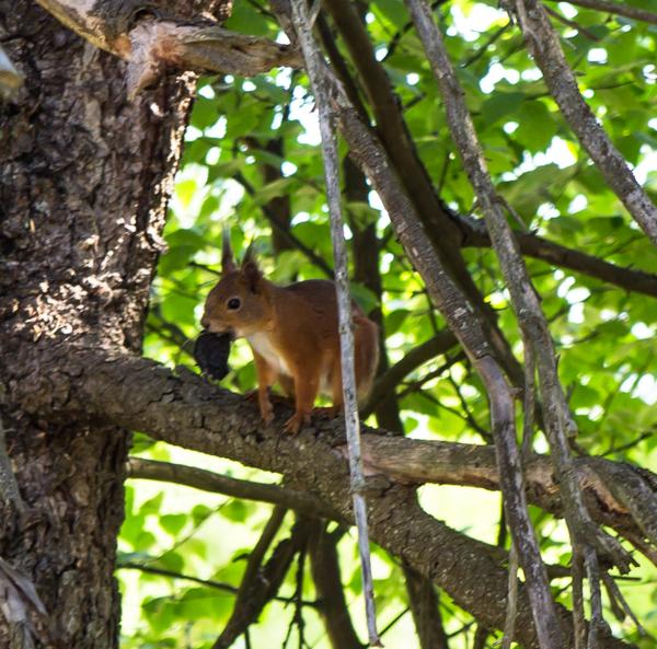 PauMau blogi nelkytplusbloggari nelkytplus orava puussa luontokuva luontokuvaus