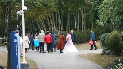 公園で結婚用アルバム写真の撮影