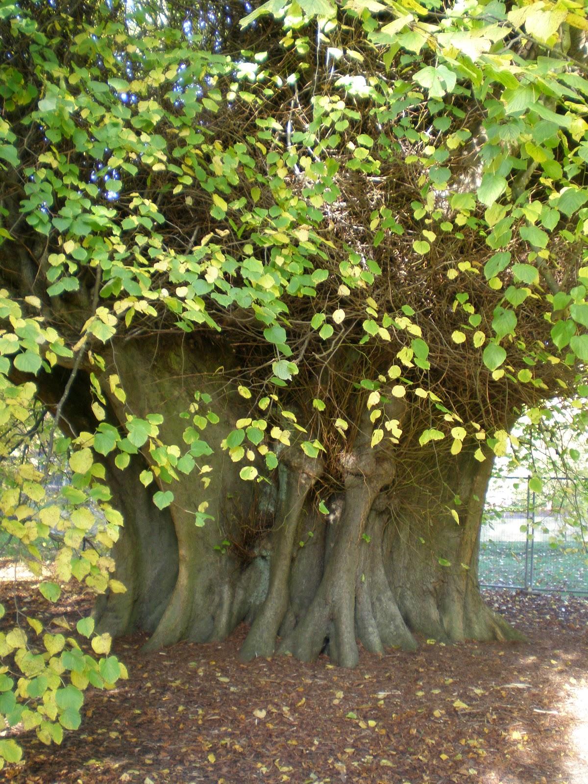 greygirlgarden  poems  stones  trees