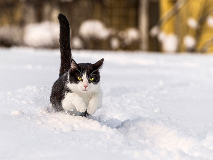 Cat running in snow