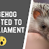 15 Fun And Interesting Facts about Hedgehogs