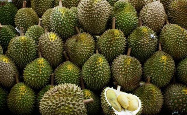 24 Jenis Jenis Durian Beserta Nombor Code Yang Rare Jarang Kita Dengar Selongkar10