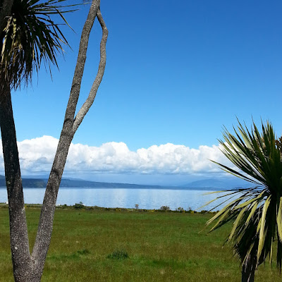 View of Lake Taupo, with cabbage trees in the foreground.