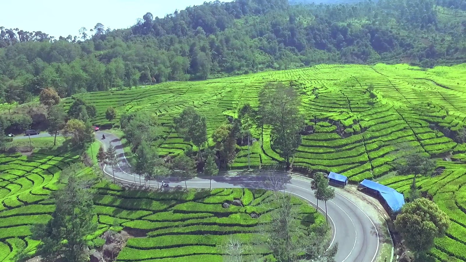 Pemandangan Desa Persawahan Keindahan Sawah