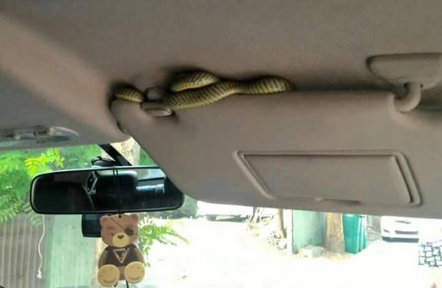 Tips terjumpa ular