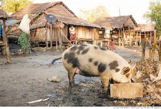 Myanmar Vawk Lak Luh Khap Duh