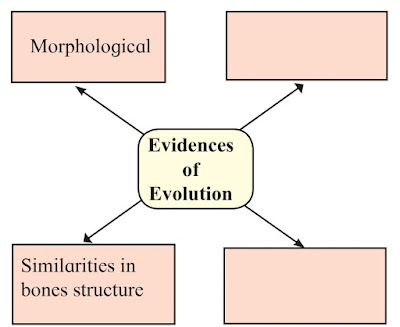 Heredity and Evolution textbook solutions for class 10