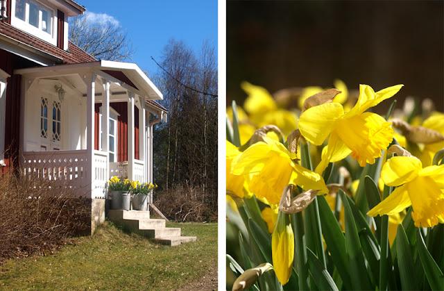 ødegård i småland - svensk ødegård - påskeliljer - svensk påsk