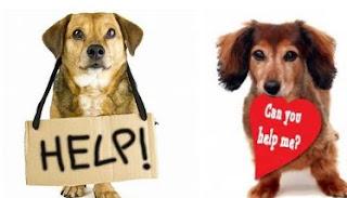 Pet здоров'я допомога для відповідей вам потрібно