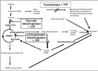 Kurangnya pasokan tiamin sebagai kofaktor dapat menyebabkan kerusakan bahkan kematian sel