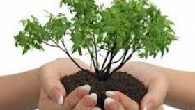Peringati Hari Pohon Sedunia, Milenial Sumbar Tanam 1001 Pohon