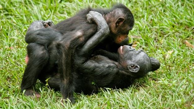 Oralsex mit Schimpansen, Tucker Star Porno