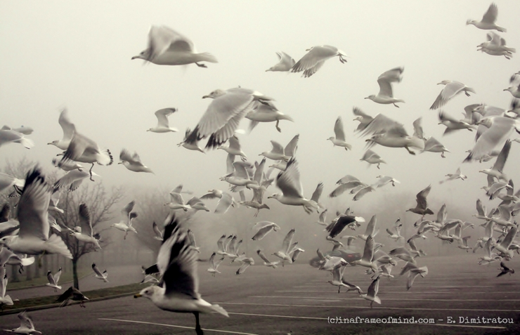 Seagulls taking off in fog