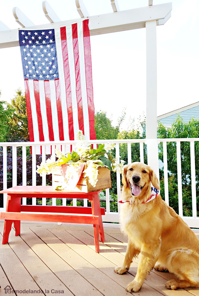 Deck with red bench and Labrador retriever dog