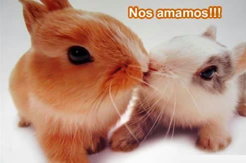 Imagenes De Amor Con Conejitos Imagenes De Amor Bonitas