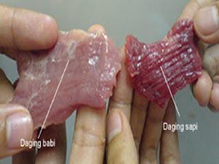 Karena Enam fakta ini, Islam Melarang Umatnya Mengkonsumsi Daging Babi