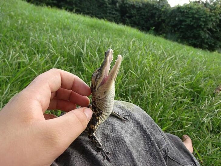 21 Cute Pictures Of Animals That Can Make Even The Worst Day A Bit Better - Just a little crocodile having a good time.